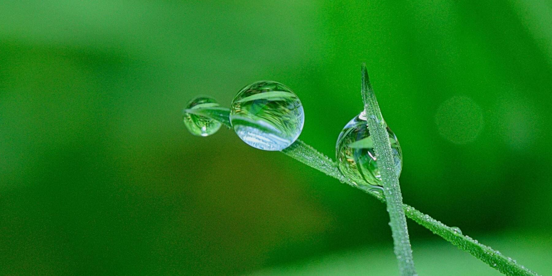 Nachhaltige Kapitalanlage gewinnt an Bedeutung - Natur Tropfen Wasser Pflanze